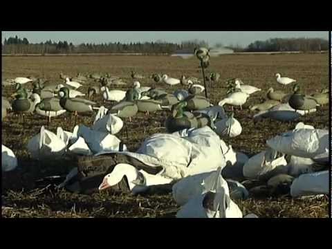 Download Preview of a Duck and Goose Hunt in Saskatchewan, Canada by Sunrise productions