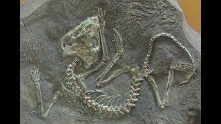 видео Вятский палеонтологический музей. Вятский Палеонтологический музей