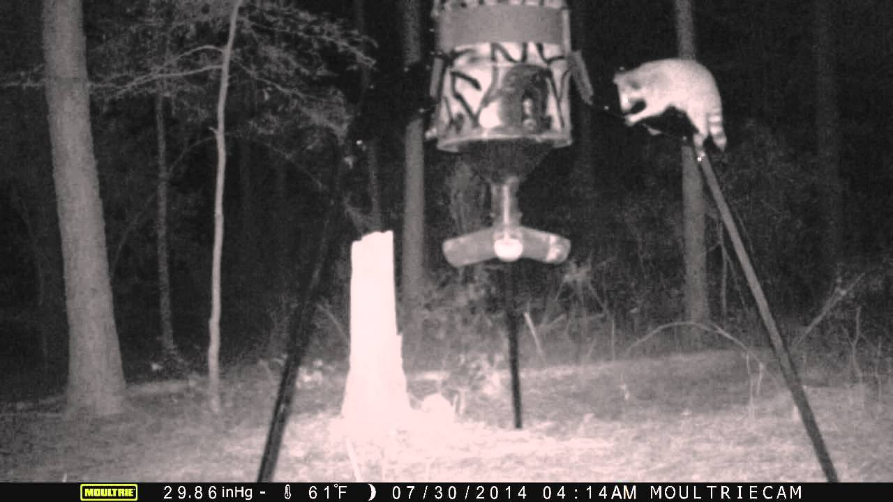 how watch protein deer to make youtube a feeder homemade feeders