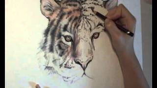 Drawing Tiger Head