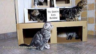 猫専用のビルディング、耐震性にはやや難あり
