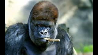 самые смешные животные, топ 30 самых смешных животных.