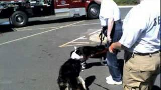 Rascals Meets Search & Rescue K-9's