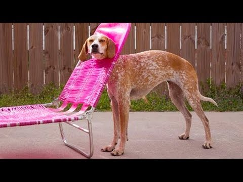 Try Not To Laugh: Top 8 Stupid Dogs | Funny Pets Compilation