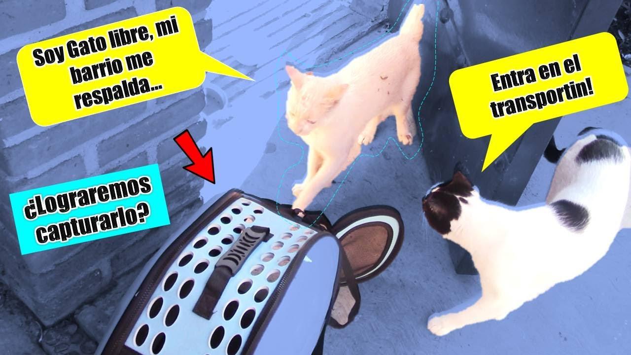 ¡Atrapamos a GATO callejero? 🙀 4 Gatos en Cuarentena!! Pte. 4  🙀🙀     DivertiVlog  
