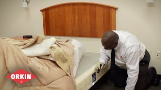 Orkin Bed Bug Service | Visual Inspections