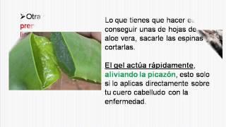 Remedios Caseros Para La Psoriasis En El Cuero Cabelludo