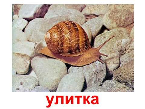 Контагиозный моллюск – контагиозный моллюск у детей