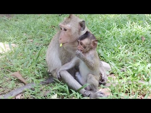Video mother monkey with the baby before her baby monkey gone away