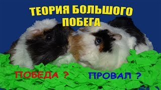 Как выгуливать морских свинок / Морские свинки / Смешное видео с животными / Приколы с животными