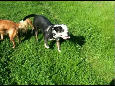 Citizen Canine Adventure Hike #4 (Jake, Sydney & Ben)