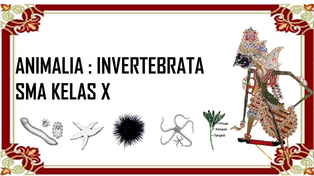 Kingdom Animalia Invertebrata Mollusca Arthropoda Echinodermata Youtube