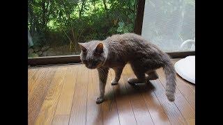 タマちゃん。平成15年6月生まれ15歳 獣医さんから、もらい受ける。 猫は看取られずに逝きたい野生感情の強い猫がいます。 タマちゃんは...