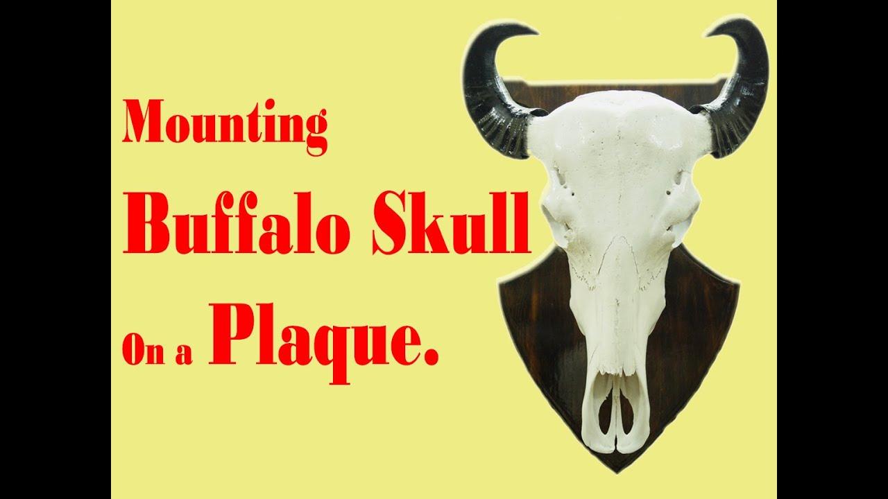 Mounting Buffalo Skull On Plaque ---- Sravan Sarella - YouTube