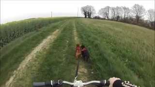 Staffordshire Bull Terrier - Canivtt - 30 Mars 2014