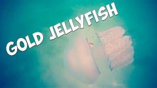 Подводный коп. МЕДУЗА 4.0. ЗОЛОТО, СЕРЕБРО, МОНЕТЫ /HD