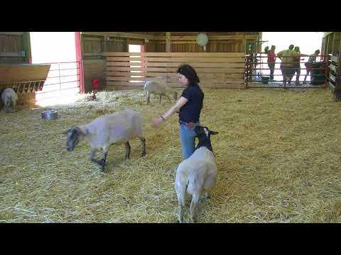 Sheep Barn Cam 05-25-2018 11:22:29 - 12:22:30