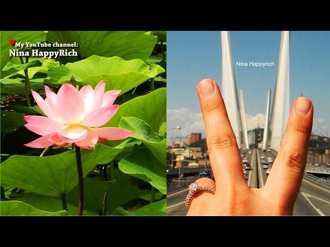 Лотос - водное растение. Выращивание лотоса из семян