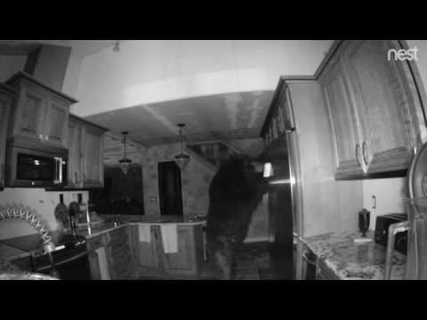 Bear rummages through Colorado Springs kitchen
