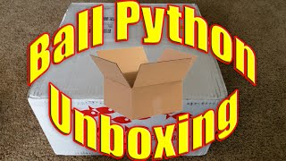 ball python unboxing leopard mojave 66 het pied pastel het clown noco reptiles