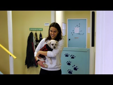 Occupational Video - Animal Care Attendant