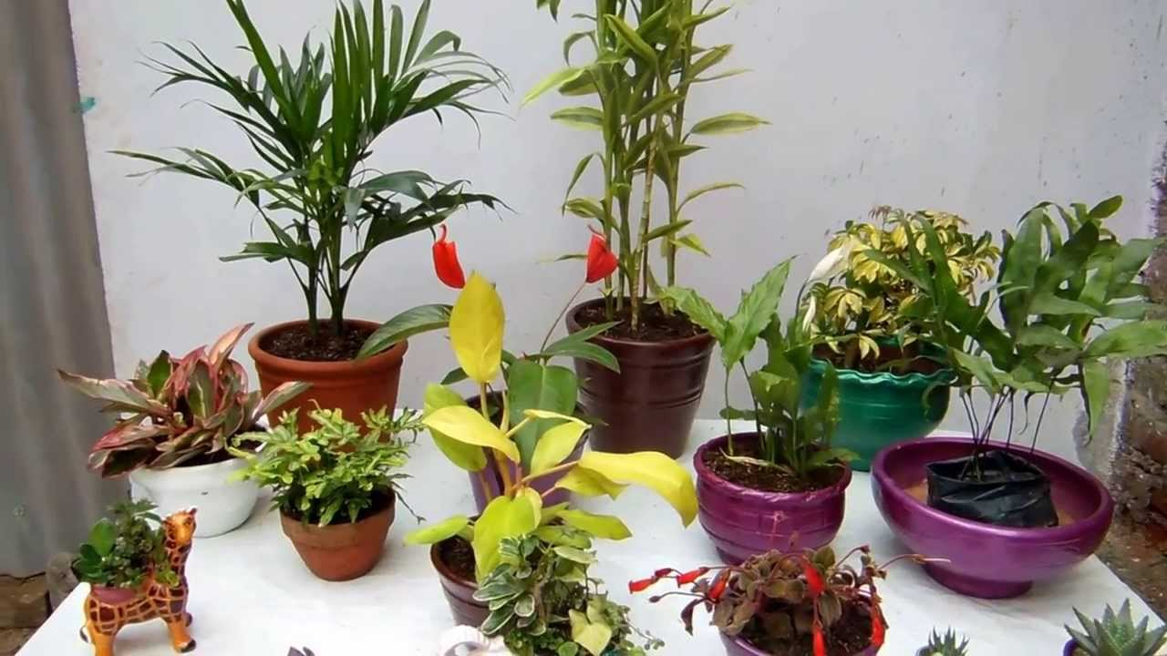 Las macetas y las plantas de interior youtube - Macetas pared exterior ...