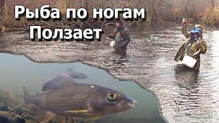 Мега клев на горной реке Тащим рыбу в забродниках Вот это рыбалка