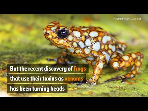 The frogs that headbutt their enemies | Natural History Museum