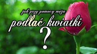 Jak podlać kwiatki? | Majewscy w domu i zagrodzie