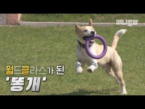 도그큐멘터리 -똥개이셔널- ㅣ Rural Dog Became The World Champion Like As Heung Min Son Did