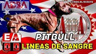 ¿ LINEAS DE SANGRE PITBULL o Ramificaciones genéticas en Pitbull (APBT) ?