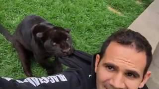 When a Jaguar stalks you...Un Jaguarito acechando...#BabyKalELBJWT #SaveJaguars #SaveOur