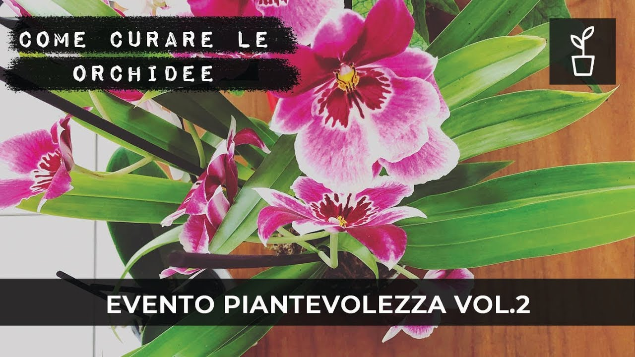 Piantevolezza 2: orchidee