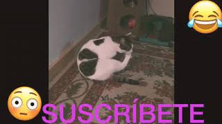 Funny cat 🐈 4