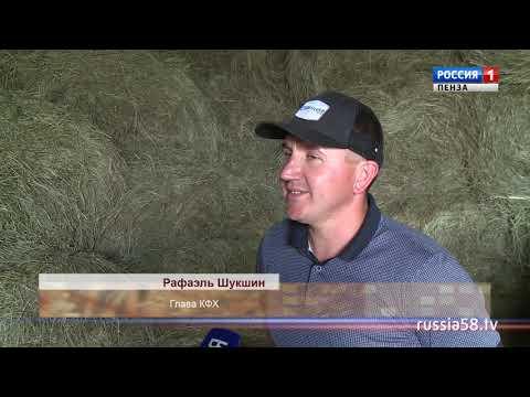 Пензенские фермеры выбирают для разведения племенных коров Сосновоборский район