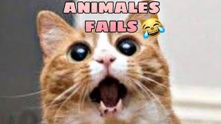 Animales Graciosos Fails  los Mejores Fails de Animales