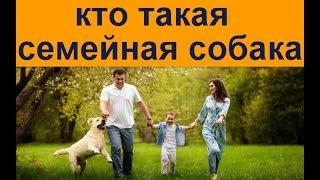 Кто  такаясемейнаясобака  Дрессировка собак в Харькове и не только