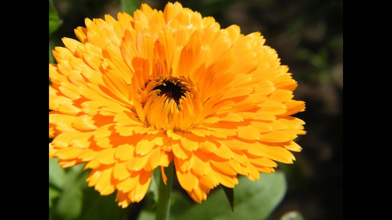 Цветы в саду ютуб
