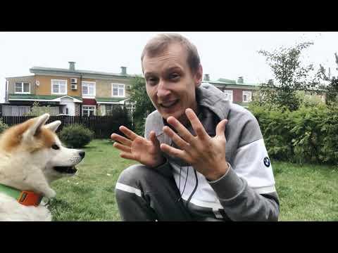 Порода собак Японская Акита-Ину. Описание породы. Мнение кинолога.