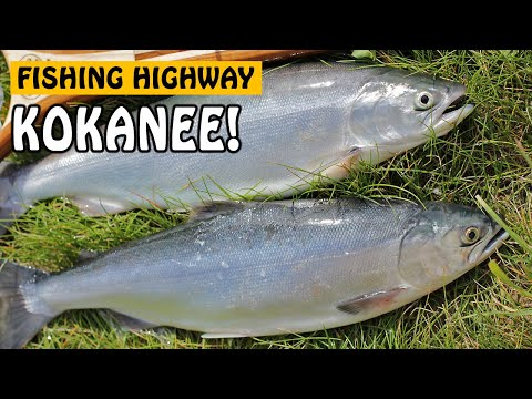 KOKANEE FISHING ON THE FISHING HIGHWAY - Deka And Hathoway Lake BC Canada | Fishing With Rod