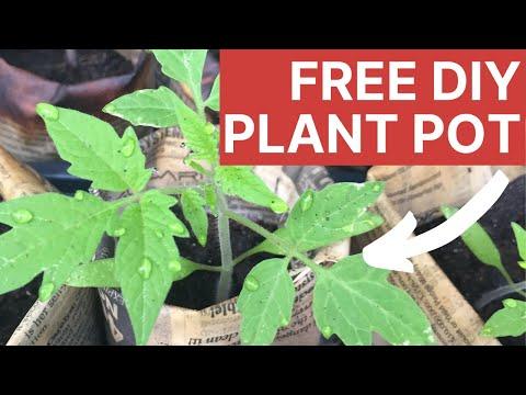Cheap DIY Tomato Pots: Eco-Friendly Newspaper Plant Pots in 60 Seconds