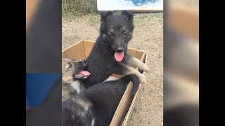 В Международный день собак есть возможность обрести друга