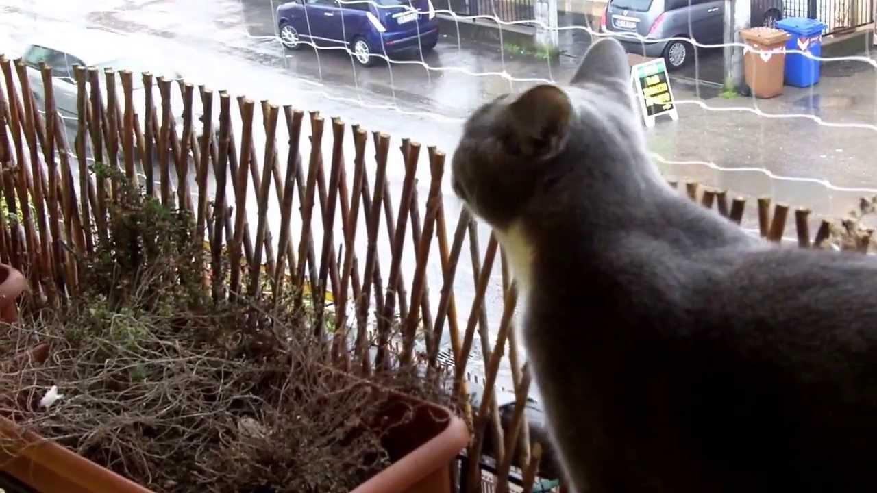 Gattini in sicurezza la rete protettiva sul balcone 3 youtube - Rete per gatti giardino ...