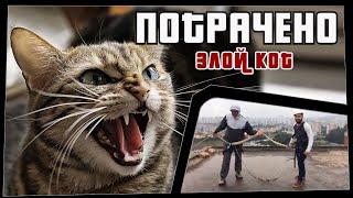Фото ПОТРАЧЕНО. Злой кот. Лучшие приколы 2020 за неделю, смешные видео