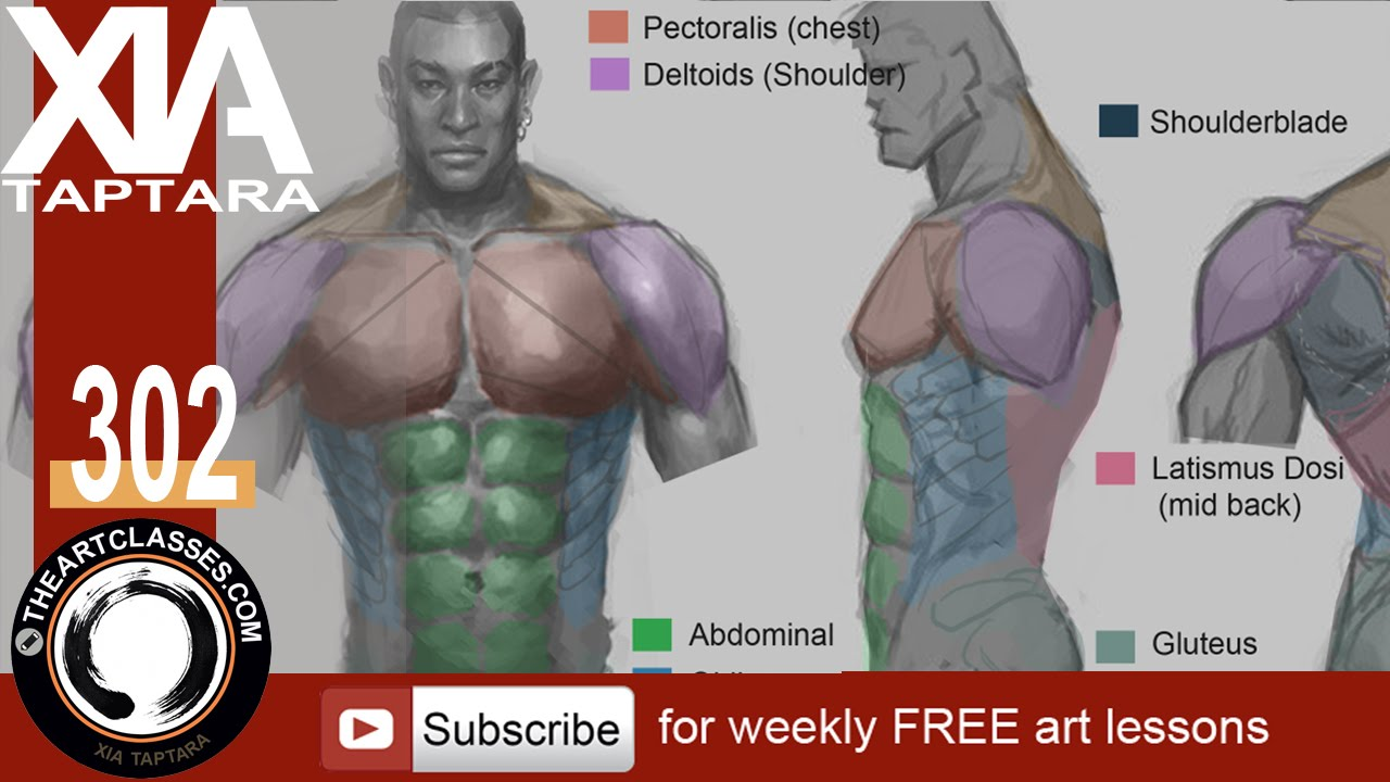 How to draw muscular body - torso anatomy drawing - YouTube