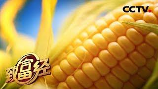 《致富经》 20190917 东北农妇花样卖玉米| CCTV农业