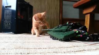 猫vs戦車ラジコンpart2 thumbnail