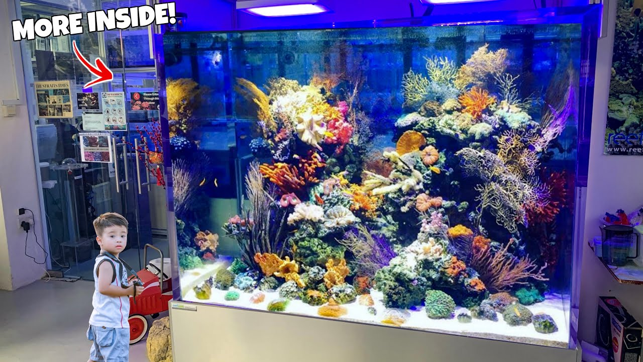 Incredible Fish Store Tour In Singapore Freshwater And Saltwater Aquarium Fish Youtube