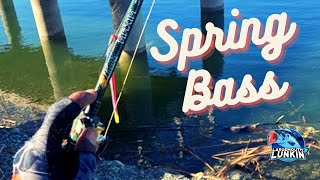 Spring Bass Fishing in Los Gatos Creek Park with NEW Combo