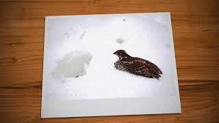 Фото-отчет с охоты на рябчика